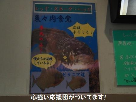 魚々肉食党