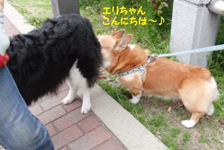 ゴンちゃんとエリちゃん