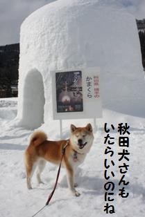 秋田犬さん