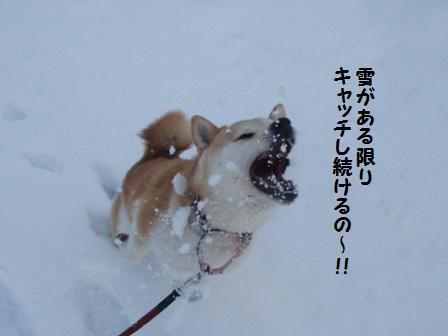 雪がある限り