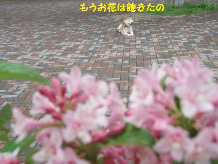 花は飽きた
