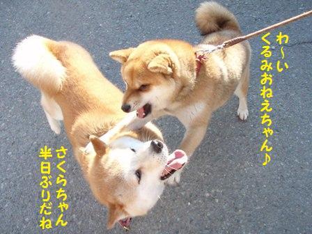 さくらちゃん