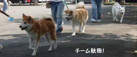 チーム秋田