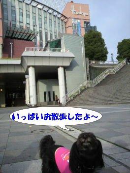 2010.11.2いっぱい歩いた~よ
