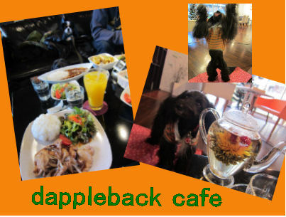 2010.12.12dappleback cafe