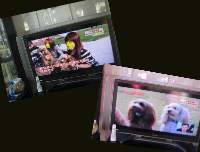 2011.1.18TV 1