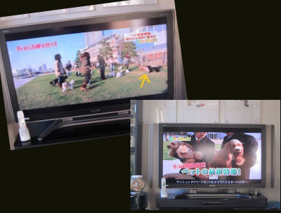 2011.1.18TV 2