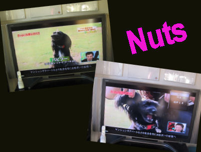 2011.1.18TV 3