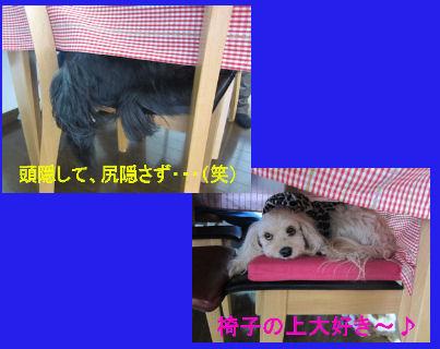 2011.2.6椅子のうえ