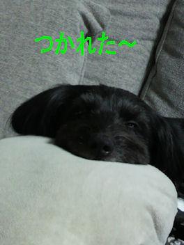 2011.2.23なつこ