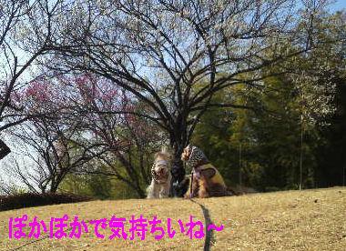 2011.2.23ぽかぽか