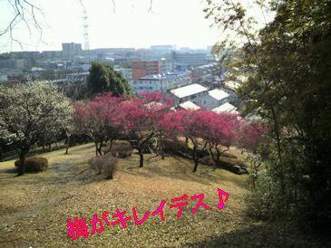 2011.2.23うめ