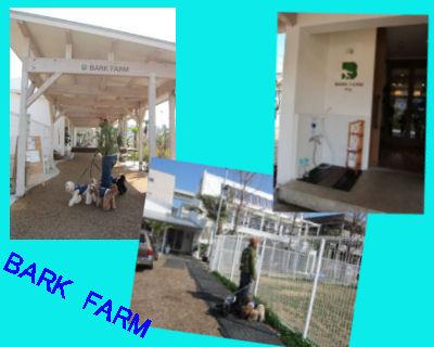 2011.2.27BARK FARM