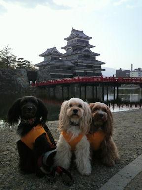 2011.5.4松本城1