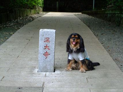 2010.5.16深大寺ラル