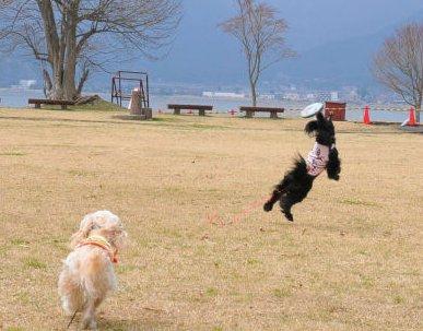 なっちゅびょ~ん2010.4.4