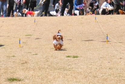 くる走る2010.4.11