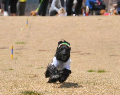 なつこ走る2010.4.11