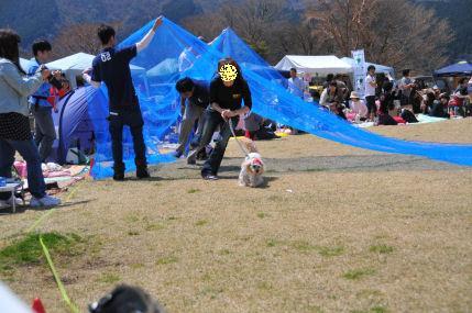あずきくぐって~2010.4.11