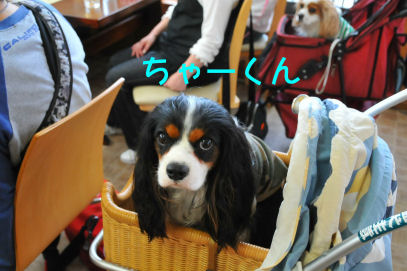 ちゃーくん2010.4.13