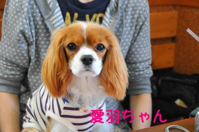愛羽ちゃん2010.4.13