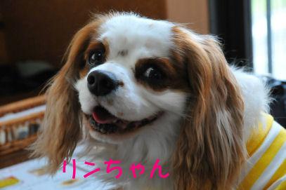リンちゃん2010.4.13