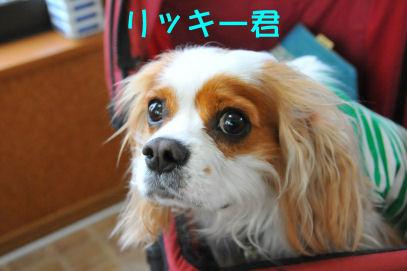 リッキーくん2010.4.13