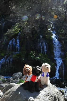 滝2010.5.1