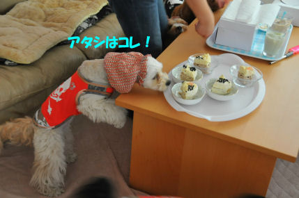 2010.5.13こそドロあじゅ