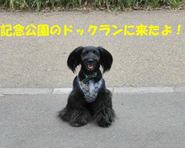 2010.6.5ドックラーンなっちゅ