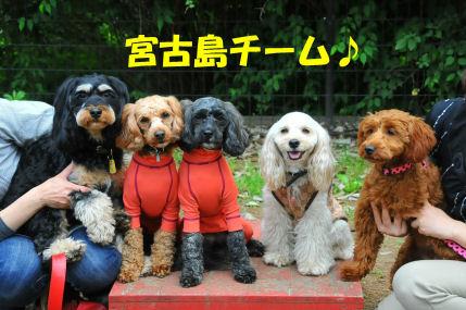 2010.6.5宮古チーム