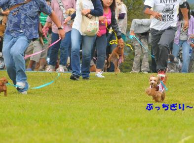 2010.10.3くる逃走