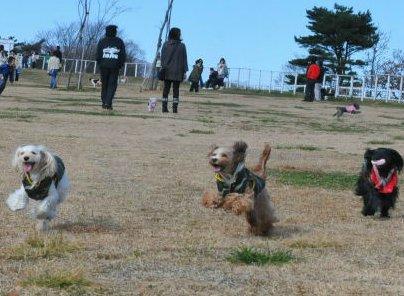 2010.11.21 みんな走る~