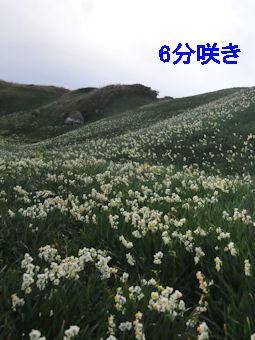 2011.1.3 6分咲き