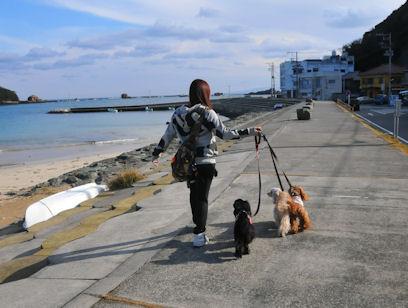 2011.1.4浜辺をさんぽ
