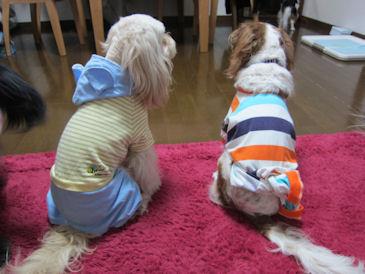 2011.3.20パジャマだよ~