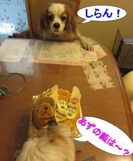 2011.4.2しらんよ~