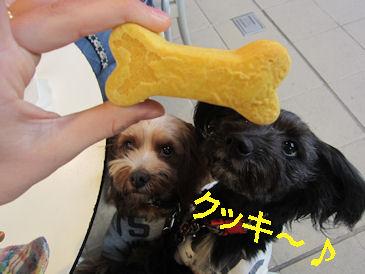 2011.4.17クッキー