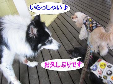 2011.5.3いらっしゃい~