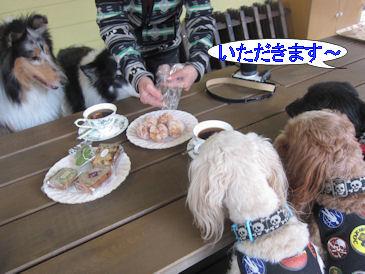 2011.5.3お茶中