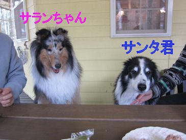 2011.5.3サンタ&サランちゃん