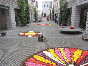 2011.5.3お花
