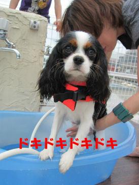 2010.6.27どきどきどき