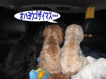 2011.5.4後姿