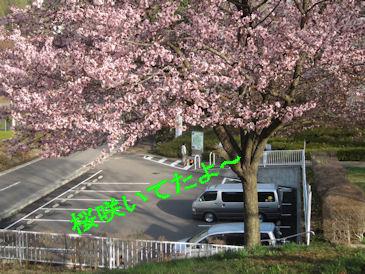2011.5.4桜