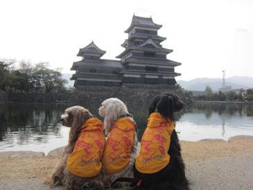 2011.5.4松本城3