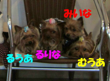 みいなファミリー2010.6.28