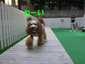 2010.6.29わーい