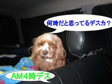 2011.5.5kuruねむすぎ~