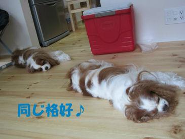 2010.7.11ララセラ姉妹